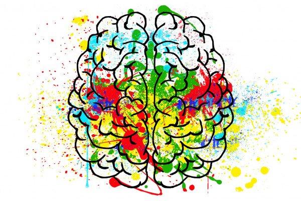Cartoon of the brain