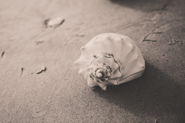 Spiral-shaped seashell