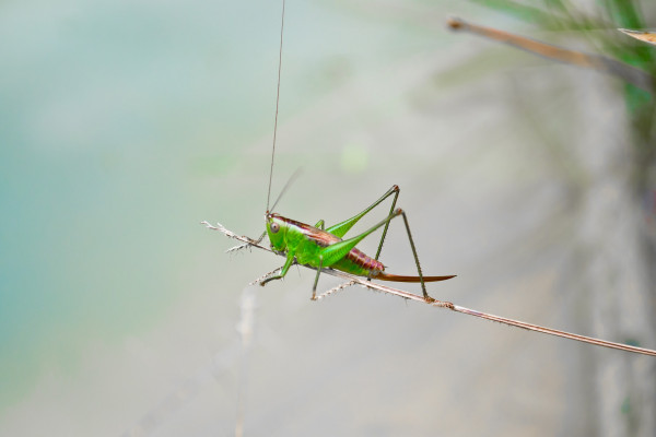 photo of a cricket on a branch