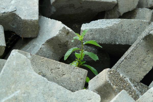 Tree in Concrete