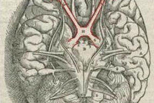 The optic chiasma - where the optic nerve fibres cross.