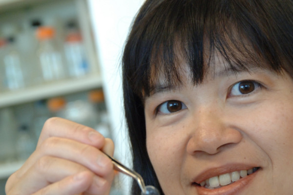 Dr. May Griffith displays a biosynthetic cornea that can be implanted into the eye to repair damage and restore sight