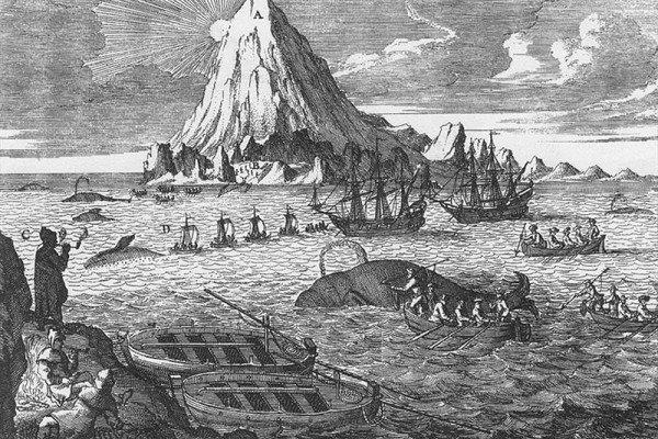 Arctic whaling engraving