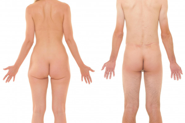 Naked female and male human body, from the back (posterior)