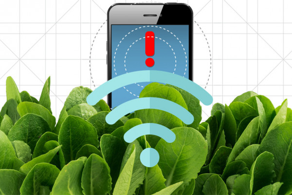 Spinach is no longer just a superfood: By embedding leaves with carbon nanotubes, MIT engineers have transformed spinach plants into sensors that can detect explosives and wirelessly relay that information to a handheld device similar to a...
