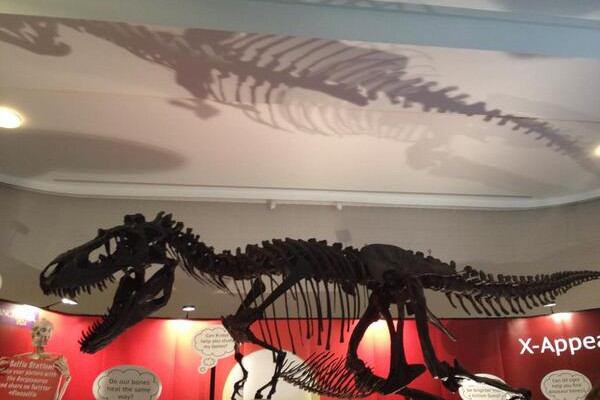 Gorgosaurus, a relative of the T. rex, at the Summer Science Exhibition