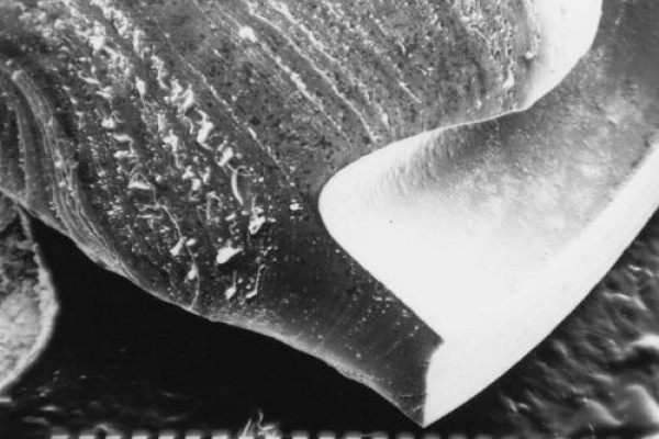 Image of fatigue of material (crankshaft)