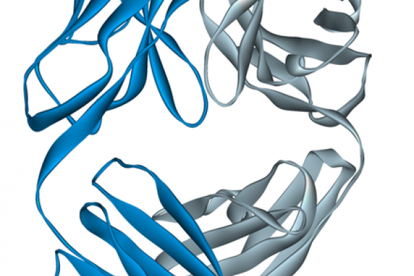 Campath, Ribbon diagram of the Fab fragment of alemtuzumab, a monoclonal antibody, bound to a small synthetic antigen. Created using Accelrys DS Visualizer Pro 1.6 and GIMP.