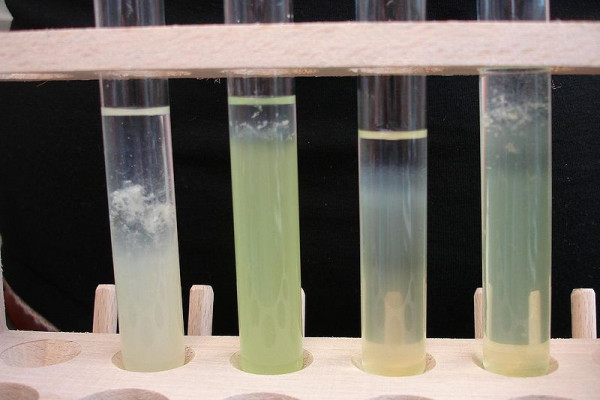 DNA extracted from courgette