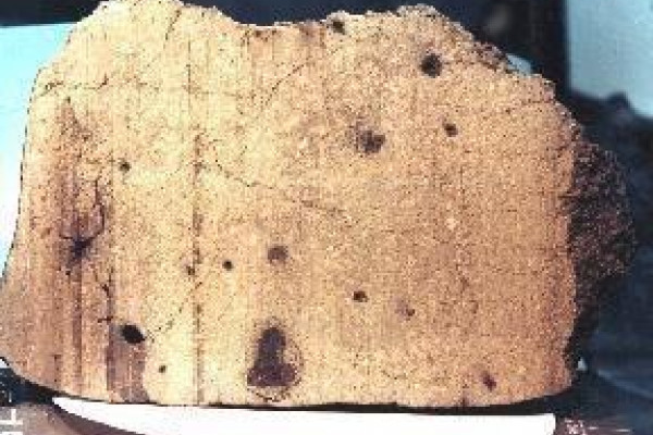 Mars meteorite EETA79001.