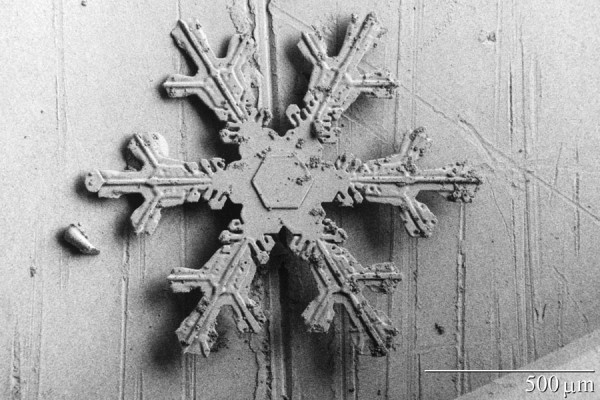 Figure 4. Dendritic snow crystal. The centre of the crystal shows its early hexagonal shape