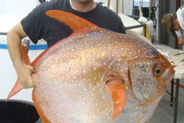 Researcher and lead author, Nick Wegner, holding a recently captured opah