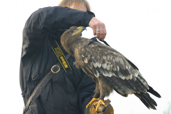 Fitting a camera on Cossak the Eagle