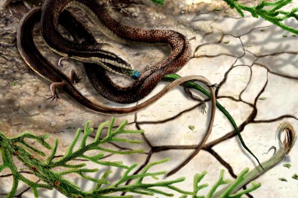 Artist's impression of Tetrapodophis amplectus catching its prey, olindalacerta (salamander)