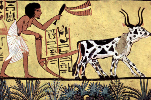 Plowing farmer depicted in burial chamber of Sennedjem, 1200BC