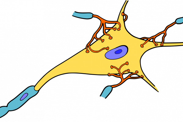 Cartoon representation of a nerve cell