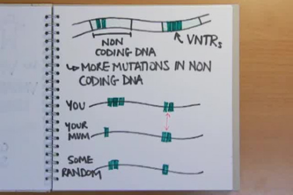How does dna fingerprinting work naked scientists podcasts share ccuart Gallery