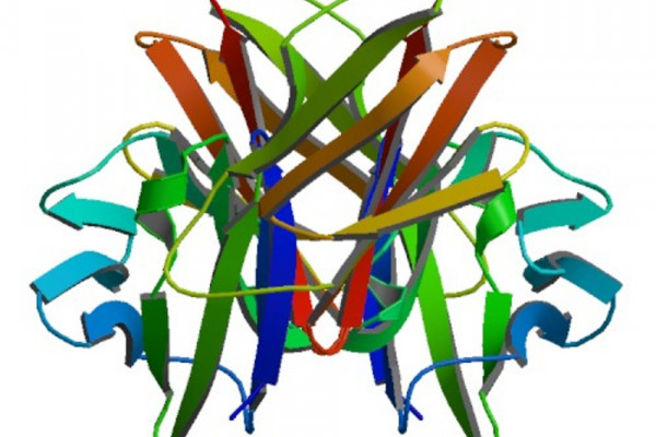 Crystallographic structure of the V-set and C2 domains of human CD4.