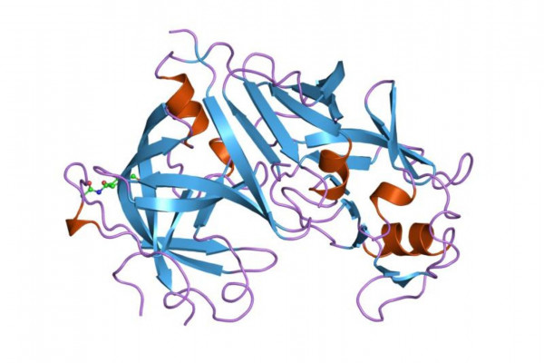 Cartoon representation of the molecular structure of the renin protein.
