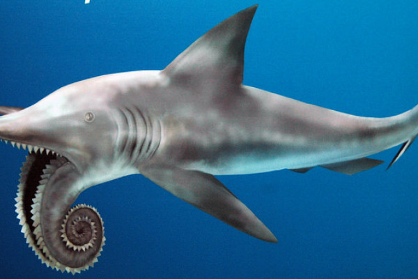 Helicoprion fossil shark reconstruction by James St. John