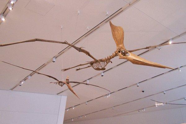 A pterosaur, the pteradon