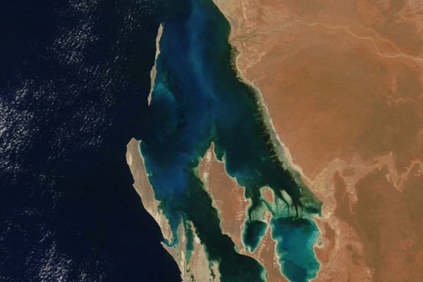 NASA's Terra satellite captured this image of phytoplankton in bloom in Australia's Shark Bay on November 6, 2004.