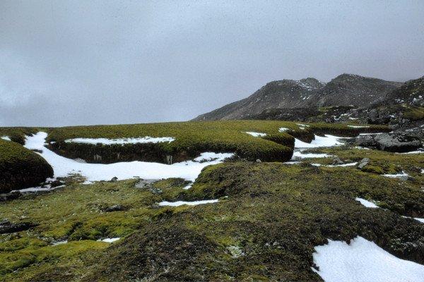 Signy Island Moss bank, Antarctica