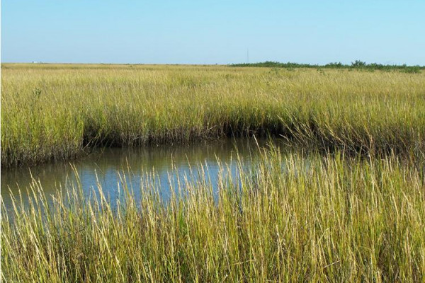 The coast of Louisiana is a deltaic system built of sediment transported from all over the United States by the Mississippi River. The river carries this sediment load to the coast where it settles out and forms sediment lobes or land.