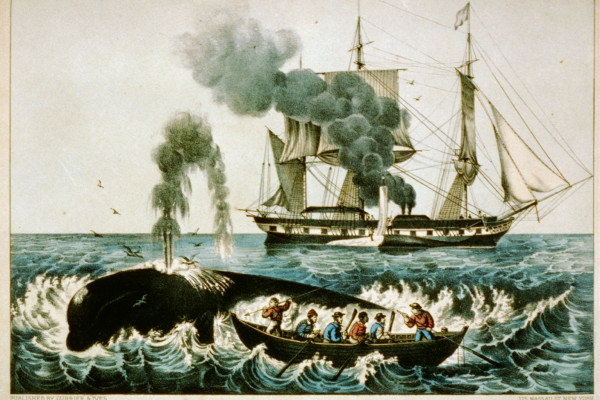 Whaling in the late 19th century