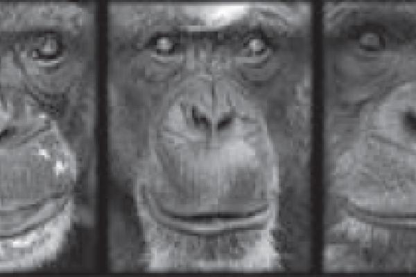 Chimp faces