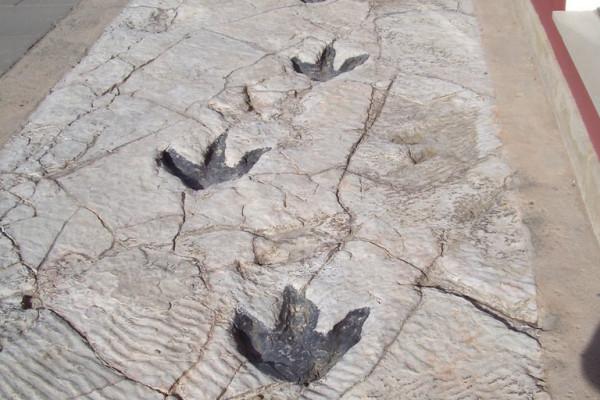 Replicas of dinosaur footprints found in La Rioja (Science Museum in Logroño)