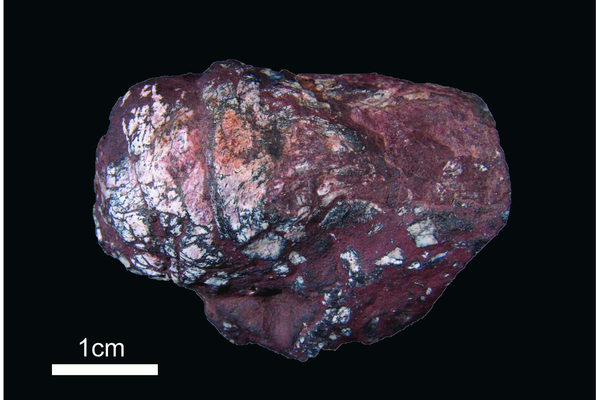 270 million year old fish coprolite containing tapeworm eggs.