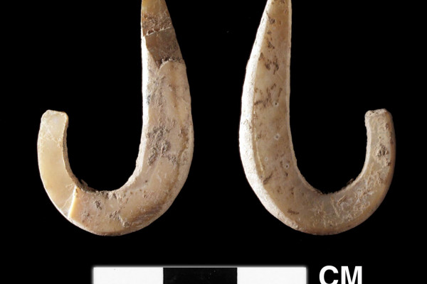 A complete shell fish hook from the Pleistocene levels of a cave site at the east end of Timor. This hook is made on Trochus shell and is dated to ~11,000 cal years BP