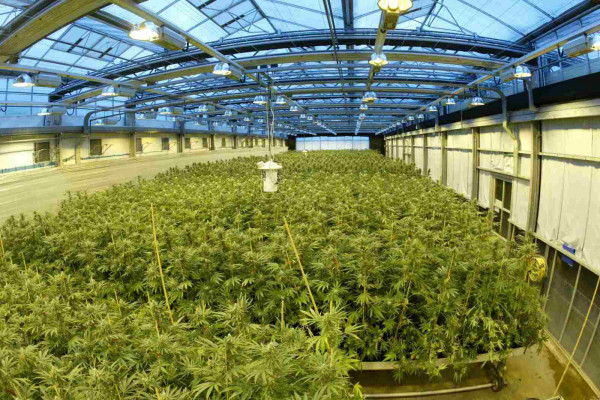 The cannabis growing facility used to create the drug Sativex.