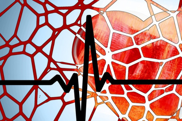A cartoon heart overlaid by a network of blood vessels and an ECG (electrocardiogram)