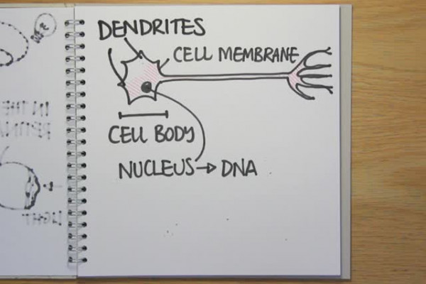 A neurone