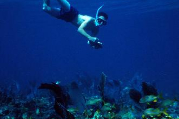 Diver collecting data on a reef