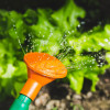 photo of someone watering plants, vegetables