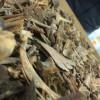 Unidentifiable bone fragments from Wairau Bar, New Zealand