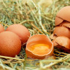 Chicken's eggs