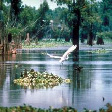 A scene in the Atchafalaya Basin in Louisiana, USA.