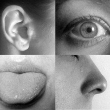 Hearing, sight, taste and smell.