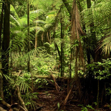 How much carbon does the Amazon absorb after logging?