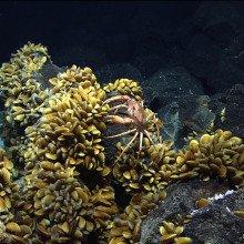 Deep sea vent