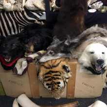 Some of the animal skins confiscated by Border Force at Heathrow