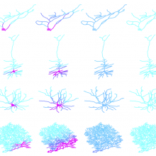 An internal conveyor system moves molecules around inside neurones.