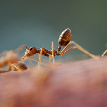 An ant walking