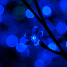 blue fairy lights