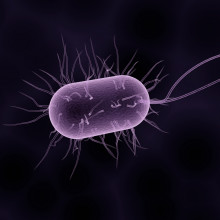 Artist's impression of a bacterium