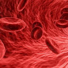 Computer generated image of Red blood cells travelling in a blood vessel